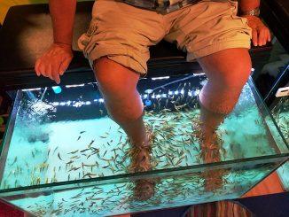 la fish pédicure n'est pas sans danger