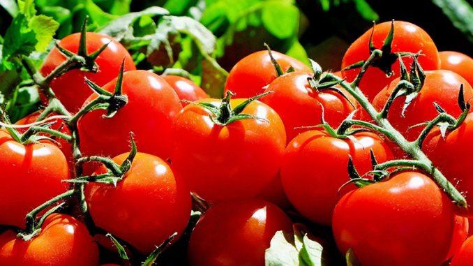 Tomates Virus France