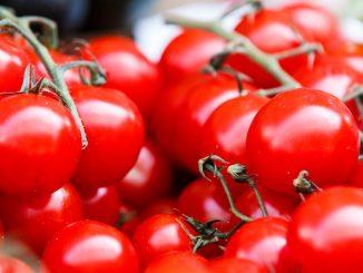 Des tomates mures et fraîches.